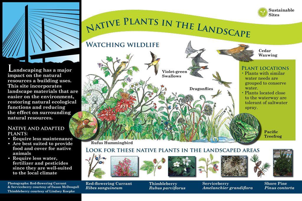 interpretive signage: native plants