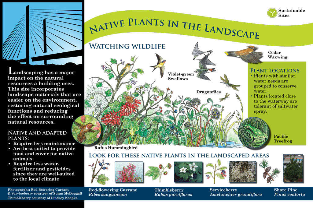 interpretive signage: native plants