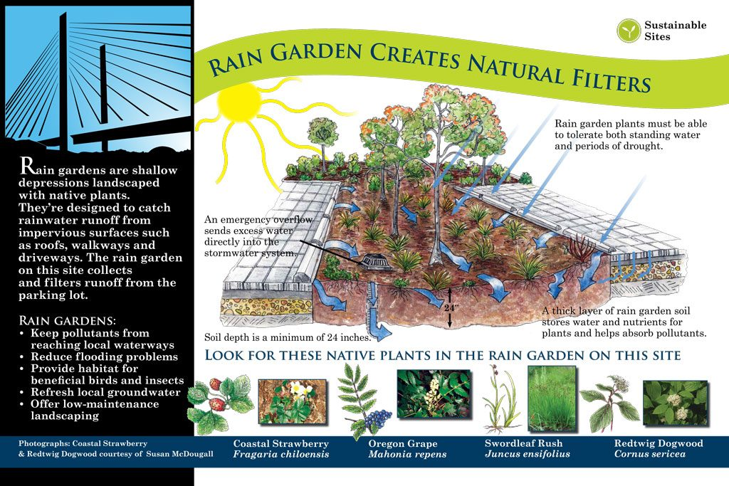 interpretive signage: rain garden