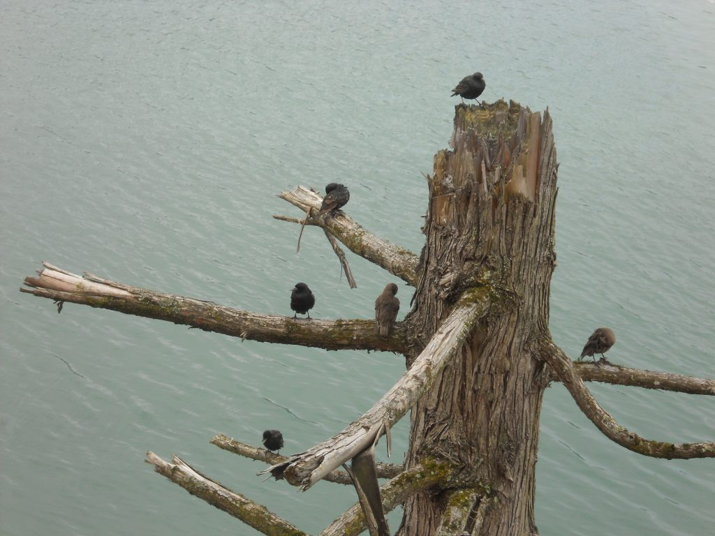 Birds perched on a tree snag