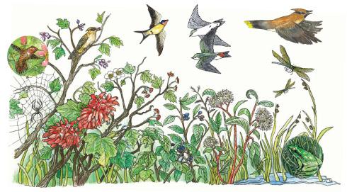 wildlife diagram